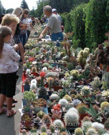 В Одессе прошла очередная выставка кактусов.