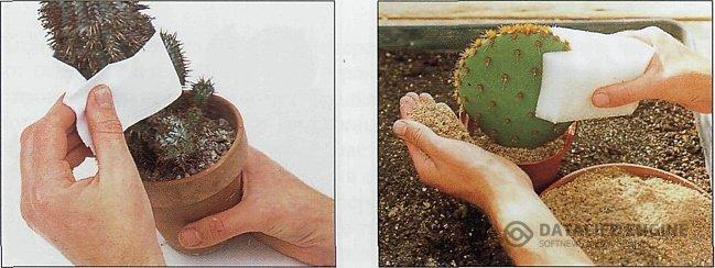 Как сделать траву в максе
